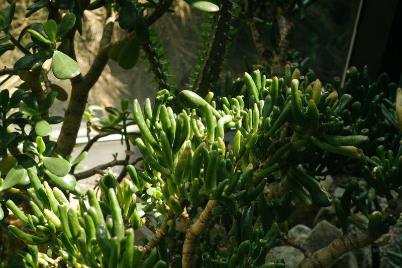 Botanic (7 of 9)